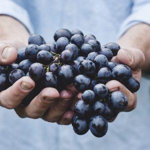 L'uva cambia col clima: un articolo di Lorenzo Ciccarese