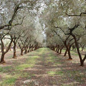 Regione Puglia – autorizzazione utilizzo PREV-AM PLUS