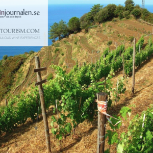 ICEA, an assurance for the sustainability of Italian vineyards